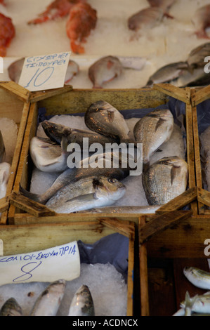 Fresh fish display in a shop at Chania on Crete - Stock Photo