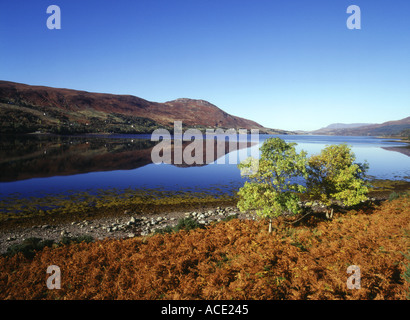 dh  LOCH BROOM ROSS CROMARTY Green leaved trees golden autumnal brown bracken lochside loch reflections
