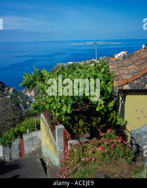 typical house porch covered by wine on a hill at the village of Arco da Calheta Madeira Portugal. Photo by Willy - Stock Photo