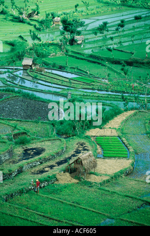Thatched huts in field of terraced rice paddies Bali Indonesia - Stock Photo