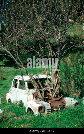 nature beats commerce tree growing through a car at Picton South Island New Zealand - Stock Photo