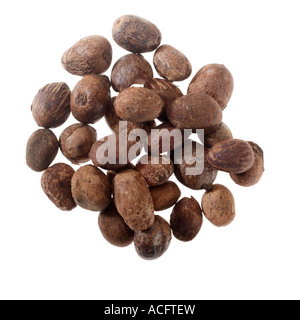 Group of Shea Nuts - Stock Photo