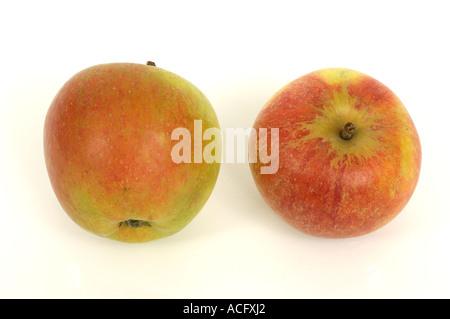 holsteiner cox æbler