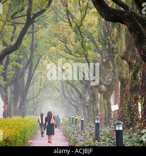 A foliage surrounded path. - Stock Photo