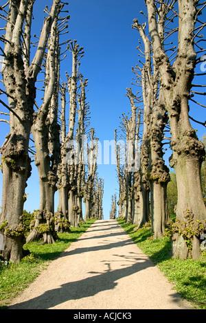 Tree avenue at Frederiksborg Slot Hillerød Denmark - Stock Photo