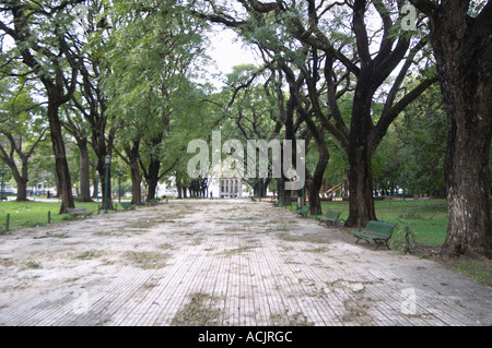 The park at the Plaza San martin Square with big black trees, one lone man in the distance, otherwise the park is - Stock Photo