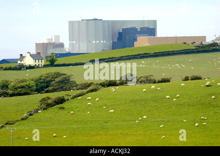 Wylfa nuclear power station on Anglesey North Wales UK GB viewed over farmland with sheep - Stock Photo
