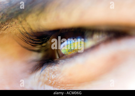 Sunflowers reflected in the eye of an Indian Man close up - Stock Photo