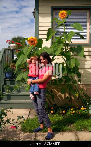 GiantSunflowers - Stock Photo