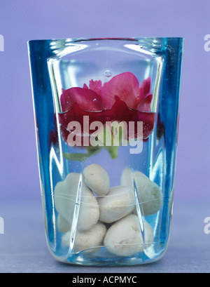 Peony in vase with silics - Stock Photo