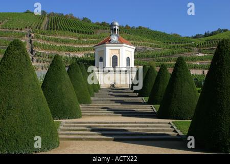 foresight vineyard castel wackerbart saxonia germany - Stock Photo