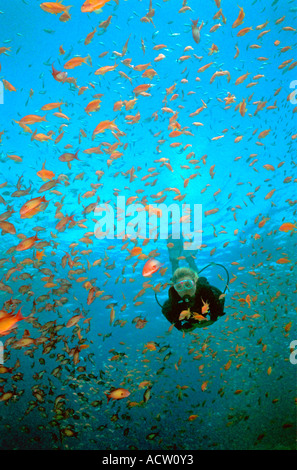 A scuba diver finning around a coral reef surrounded by many goldfish (anthias squamipinnis). - Stock Photo