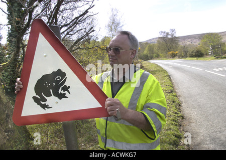 A council worker errects toad crossing warning sign on road at Trendlebere Down in Dartmoor National Park England - Stock Photo