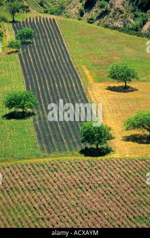 Lavender in Provence. France - Stock Photo