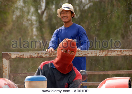 Thai farm worker riding on a tractor in the Negev desert Israel - Stock Photo