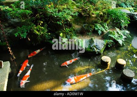 Japan ishikawa kanazawa nomura samurai house stock for Koi pond quezon city