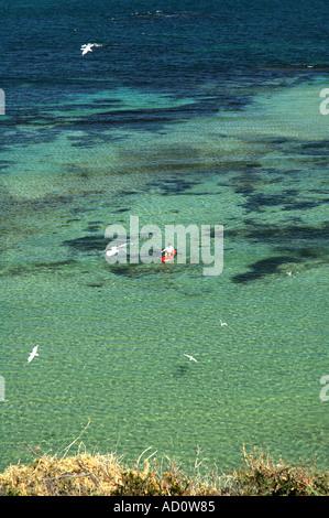 Sea kayaker amongst silver gulls Larus novaehollandiae Shoalwater Islands Marine Park Western Australia Stock Photo
