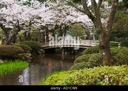 Japanese Garden Cherry Blossom Bridge cherry blossom and bridge at kenrokuen garden in kanazawa japan