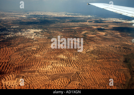 Olive trees orchards seen during landing approach in Tunisia, view from plane window - Stock Photo
