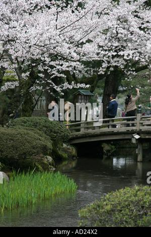 cherry blossom and bridge at kenrokuen garden in kanazawa japan stock photo