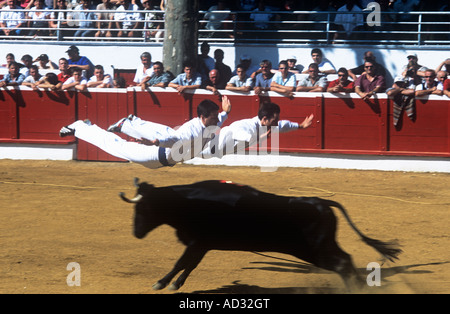 In Course Landaise sporting thrills include athletic young men, sauteurs, sometimes two together, leaping over a - Stock Photo