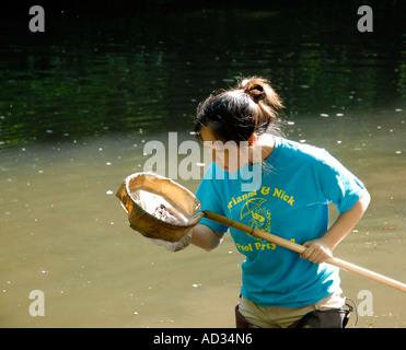 Teenage Asian-American girl using net sampling river water for fish and invertebrate biological indicators of water - Stock Photo