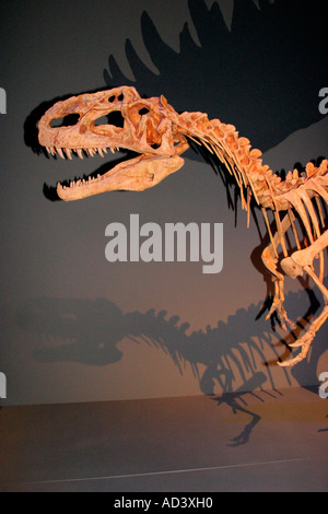 Lifesize replicat of skeletal structure of Monolophosaurus Dongi dinosaur. - Stock Photo