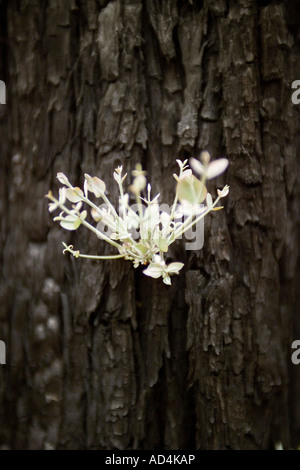 A new shoot growing from a tree trunk - Stock Photo