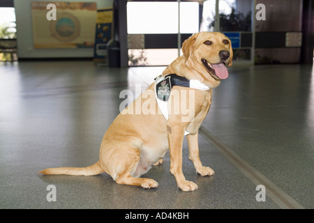 A police dog - Stock Photo