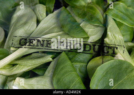 A packet of corn salad stamped 'Gene Product' - Stock Photo