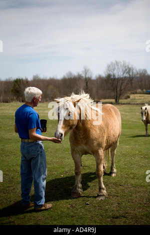 A man feeding a horse in a paddock - Stock Photo