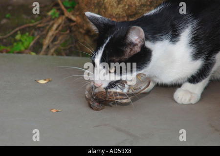 Cat With A Sparrow In Its Mouth - Stock Photo