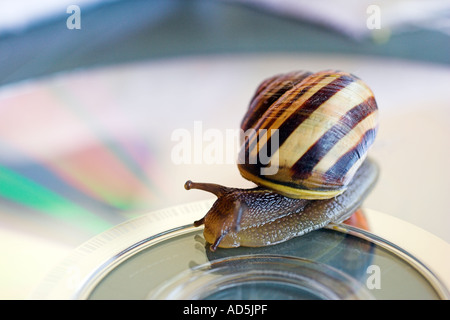Snail on a compact disc
