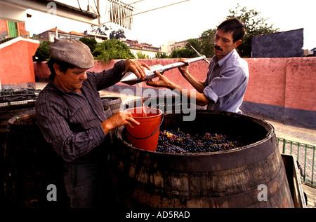 Portugal douro valley port wine man men testing grapes - Stock Photo