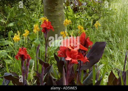 Red flowers growing wild on Flores island Azores - Stock Photo