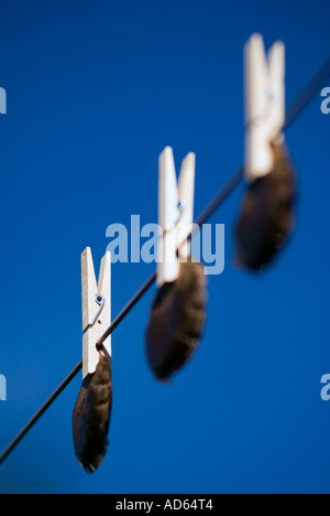 Hanging tea bags out to dry. Recycling - Stock Photo