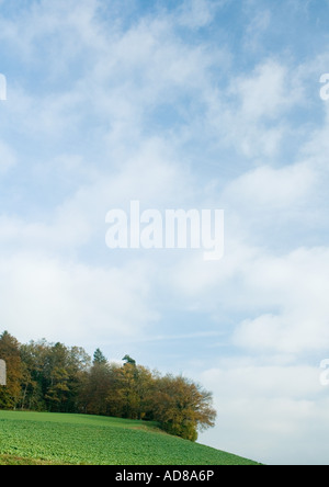 Switzerland, landscape with trees and sky - Stock Photo
