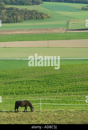Horse grazing in green pasture - Stock Photo