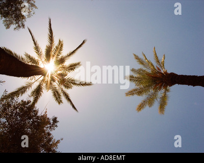 blazing shines through palm tree,Morocco - Stock Photo