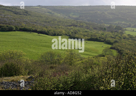 A pasture surrounded by forest and hills with cattle grazing on the glowing green grass in the late afternoon sunshine - Stock Photo