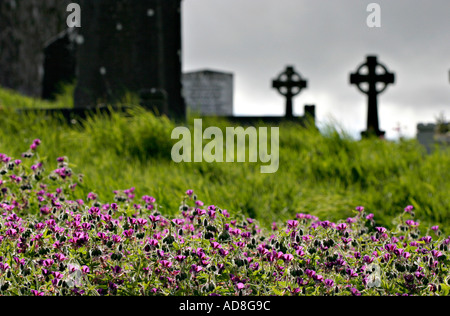 A graveyard framed by a row of brilliant vetch flowers with two softly focused celtic crosses A grey sky in the - Stock Photo