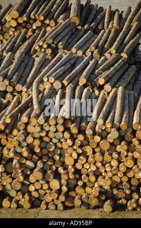Pine logs awaiting export at the port of Nelson New Zealand Stock Photo: 13345486