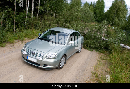 Toyota Avensis and a fallen birch tree, which is blocking the road , Finland - Stock Photo