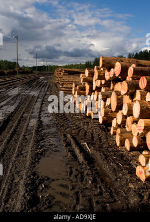 Pine ( pinus sylvestris ) logs waiting for transport at the side of a muddy road , Finland - Stock Photo
