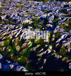 Limestone pavement above Malham Cove Yorkshire dales national park Yorkshire England - Stock Photo