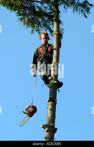 Tree Surgeon with Chain saw on fir tree. Southern England United Kingdom UK - Stock Photo