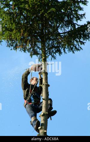 Tree surgeon cutting top of fir tree. Southern England United Kingdom UK - Stock Photo