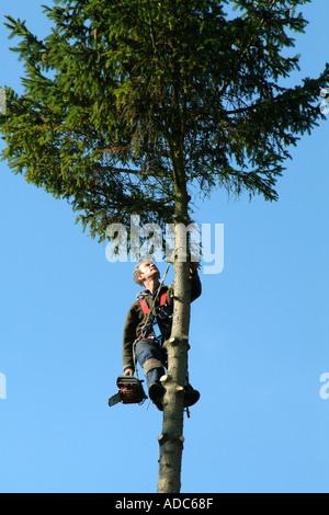 Tree Surgeon - Stock Photo