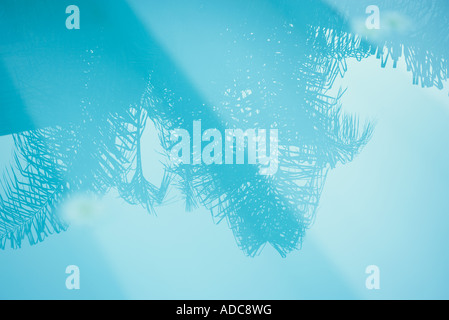 Palm tree reflected in surface of water - Stock Photo