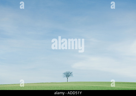 Tree in middle of flat green landscape - Stock Photo